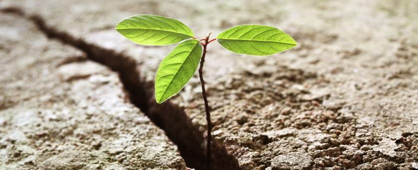 Seed long
